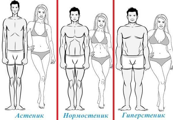 Астенический тип телосложения это